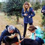 Le cavage de la truffe avec l'aide de Prune