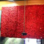 Some of the poppy wall