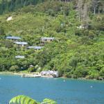 View of Punga Cove Resort