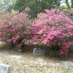 headstones in pink