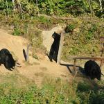 Photo de Observation de l'Ours Noir