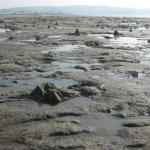 Submerged forest at low tide