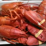 Nothing like Maine Lobster