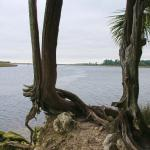 Confluence of Wakulla and St. Marks Rivers