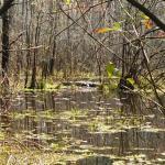 Congaree Creek Heritage Preserve
