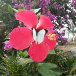 jardin Villa Elijah