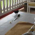 The Finch's joined us every morning--they like orange bits and the delicious breads.