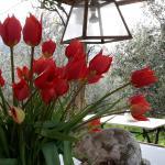 raccogliere tulipani