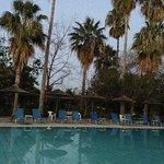 Пожухшие пальмы у бассейна