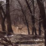 Saw 20+ deer resting in the woods