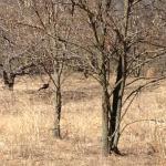 Saw flock of turkeys