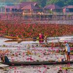 Thale Noi Lotus Lake goes wild at dawn and dusk.