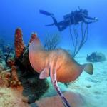 Stingray Alley with Dockyard Divers