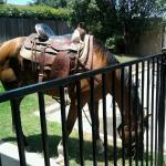 Horse hitched out back of Hoffbrau Steaks