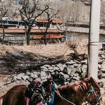 Resting pilgrims pony, Wutaishan