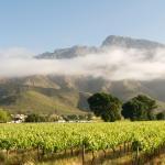 Vineyards on the farm