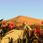 Photo of La Vallee des Dunes