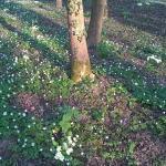 Primavera in parco di Villa Varda