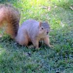 Squirrel at Children's Fairyland, Oakland, Ca