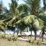 Rocky Point Beach Bungalows