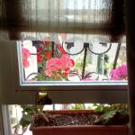Plant/Window Sill