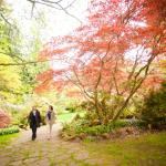 Walking into the Rhododendron Grove