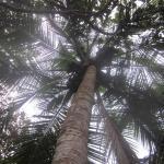 gotta love those palms!