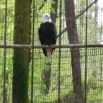 Eagle vocalized while we were there.