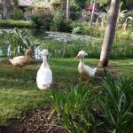 Foto de Ramada Santa Barbara