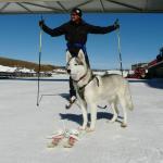 Ski with your dog