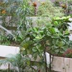 Der 'Dschungel' im Treppenhaus