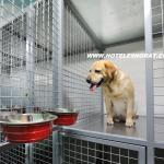 Habitaciones para mascotas