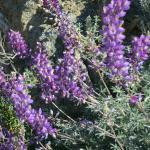 March Wild Flowers