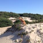 Foto de Praia de Peixe