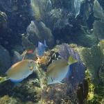 Fish at Porto Morelos