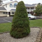 Ogunquit Resort Motel and grounds