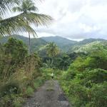Roots Jungle Retreat Foto