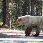 Photo de Bear Camp