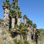 palms on slope to beach