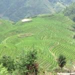 The beautiful rice fields surrounding Ping'an Village