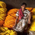 Marigold Garlands in the Kolkata Flower Market