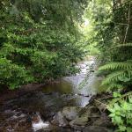 Река рядом с Mellifont Abbey