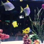 We were seated next to the fish tank