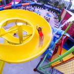 Parrot's Perch Yellow Slide