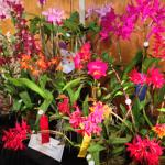 A display of orchids from the WNC Orchid Society Show held at the Arboretum in Asheville.