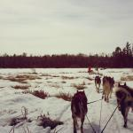 Foto de White Wilderness Sled Dog Adventures - Day Tours