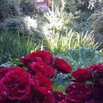 Rosales por doquier en Pinotea