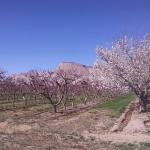 Beautiful views - Apple and Peach trees in bloom.