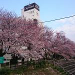 Caminho de cerejeiras em frente ao hotel