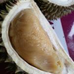 Daging duriannya tebal